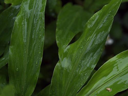 rainy season03