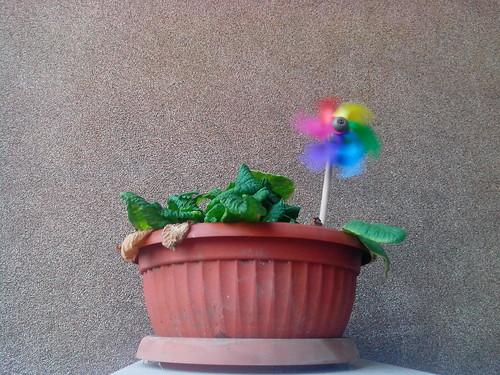 Fiore, girandola, vento, muro... by durishti