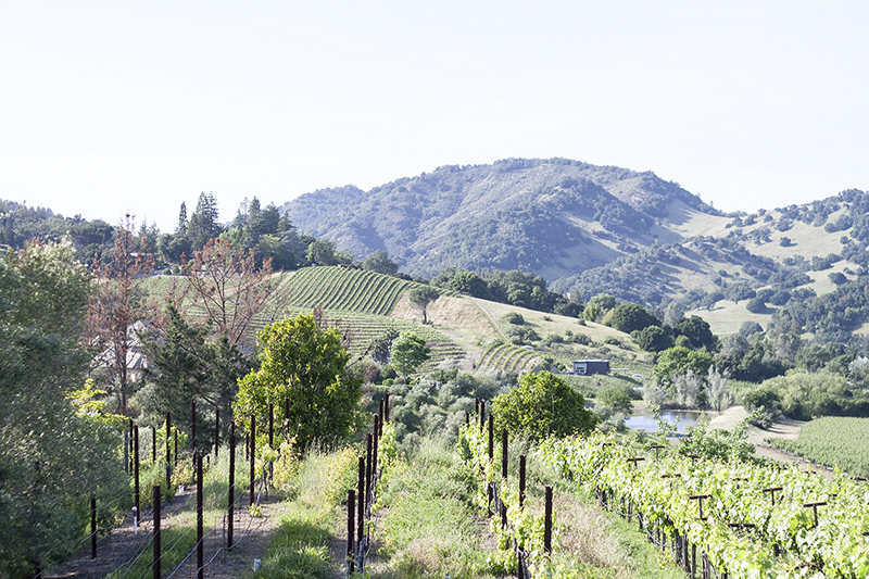 02-napa-winecountry-vineyard-travel-landscape-getaway