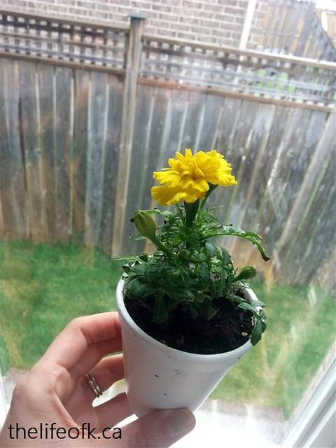 MothersDay_Sunflower
