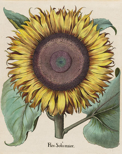 Sunflower200dpi