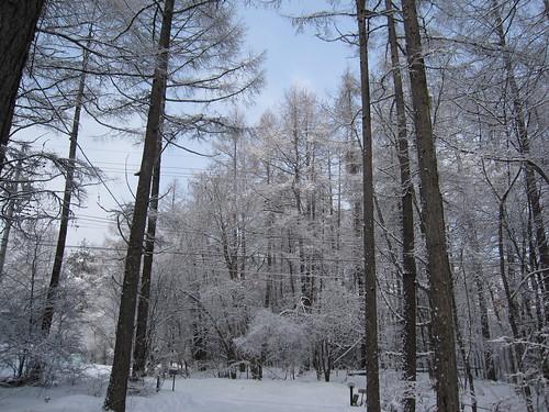 朝の雪景色 2012.4.1 by Poran111