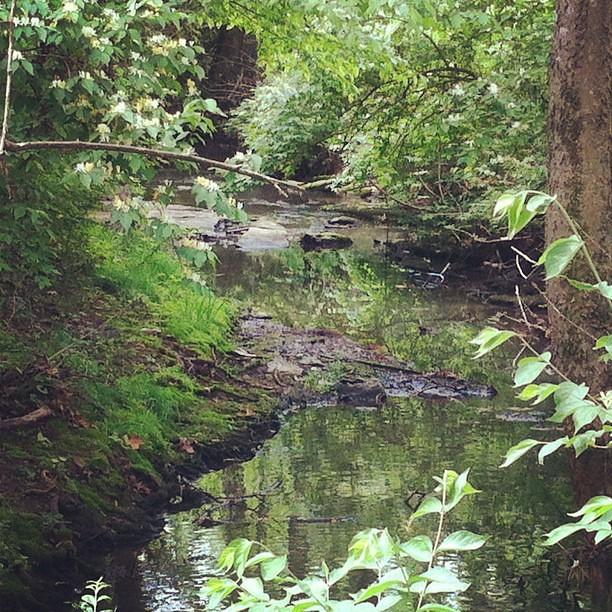 More creek.