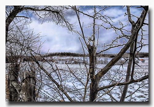 ohio farm winter scene landscape snow thorn nikon d80 thomasdwyer fruit tree yabbadabbadoo scenicsnotjustlandscapes enon enonohio tomdwyer image photo