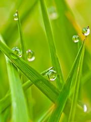 Dewish grass