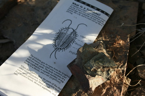 Trilobite Hunting!
