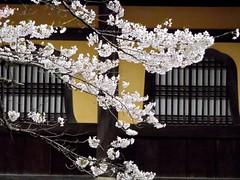 京都 Kyoto 2012 April