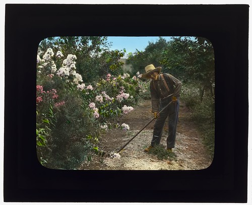 Old glass lantern slide of gardener