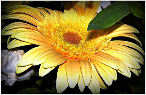 Happy flower..........