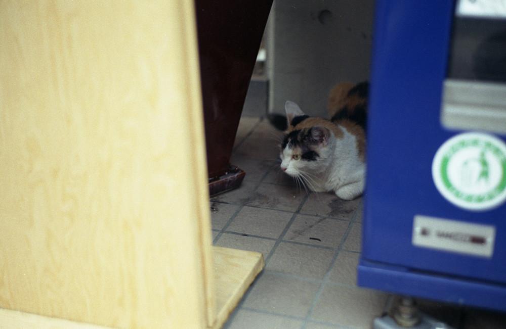 自販機裏の猫