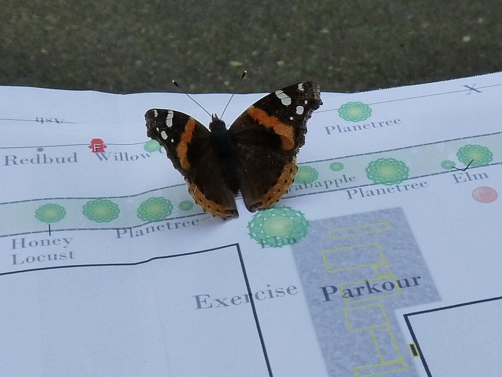 Red Admiral and Tree Map