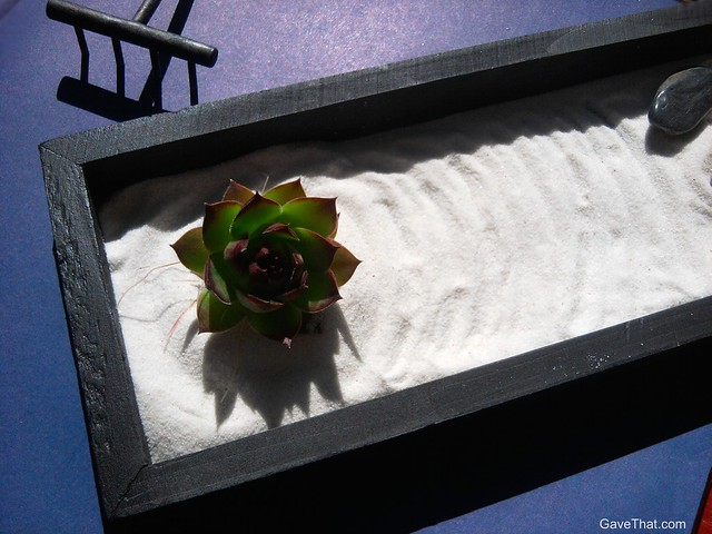 Hen and Chick plant in sand miniature Zen Garden