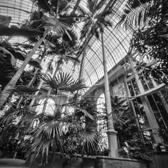 Temperate Palms Glasshouse, Botanics