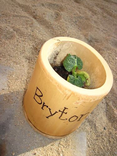 single bamboo pole pot