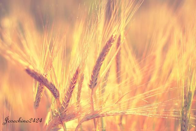 Luz en los campos