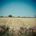 Small photo of Field