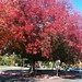 Fall colors in Lot J - 2
