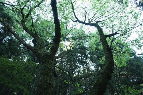20120505 Kuragari ravine 4
