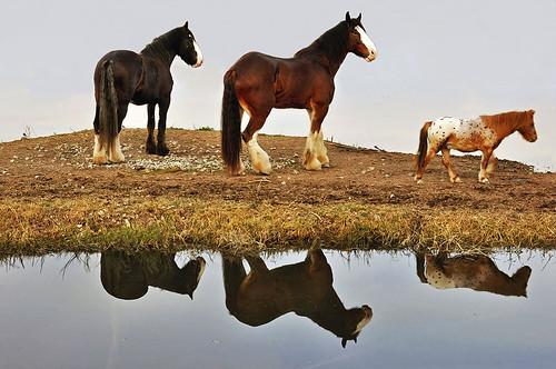 La isla de los caballos - The island of the horses by Marco Antonio Losas