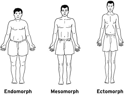 the-3-body-types