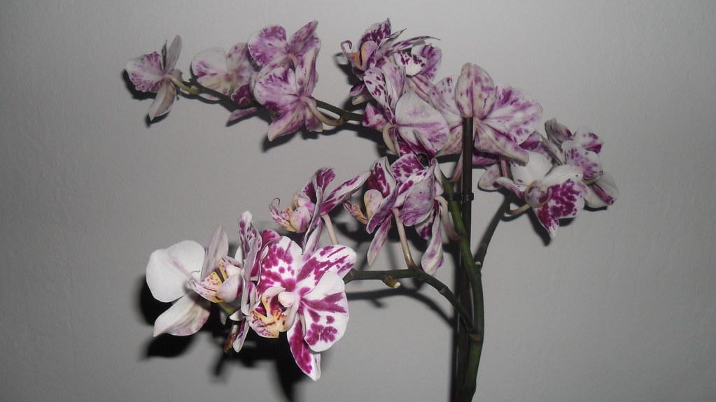Orhideele lui Victor - Pagina 6 7340555072_5d71ed9a42_b
