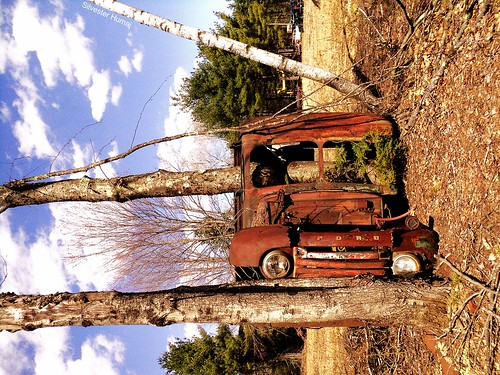 auto old autumn trees winter wild sky usa tree fall ford 1948 abandoned clouds truck spring amazing woods rust antique side over newengland newhampshire f100 nh headlights oldschool grill evergreen rusted oxidation april delivery trucks junkyard wtf salvage fell 1950 1949 sideways flipped rolled wilton blanchards tipped salvageyard birtch paneltruck fseries howlong leftfordead carsinbarns