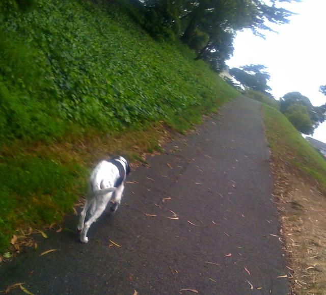 Emma's last walk