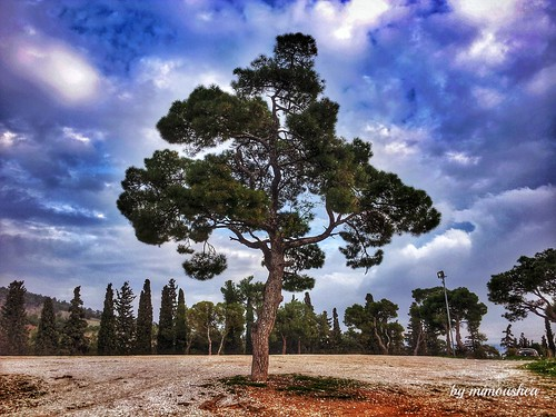 tree nature pine landscape greece thessaloniki cloudscape flickrandroidapp:filter=none περιαστικόδάσοσθεσσαλονίκησσέιχσου