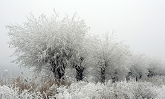 fog(1.0), branch(1.0), winter(1.0), tree(1.0), snow(1.0), plant(1.0), rain and snow mixed(1.0), frost(1.0), morning(1.0), monochrome(1.0), winter storm(1.0), blizzard(1.0), freezing(1.0), mist(1.0), twig(1.0),