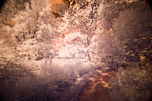 Walk through Woods by Bruce Shapka