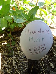 Chocolate Mint Spoon Garden Marker