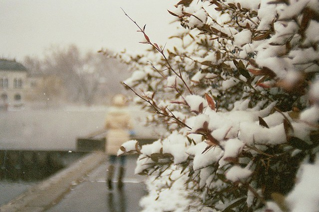Budapest, city, streets, tour, trip, journey, Hungary,  snow, winter, spring, 35mm film photography,  Kodak MAX 400 expired, girl walking away, bushes, branches, snow, wintertime, park