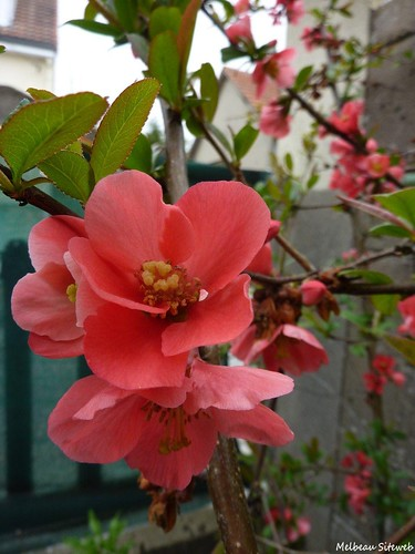semis fleurs du jardin le blog de melbeau siteweb. Black Bedroom Furniture Sets. Home Design Ideas