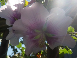 042212 Morning Glory-2