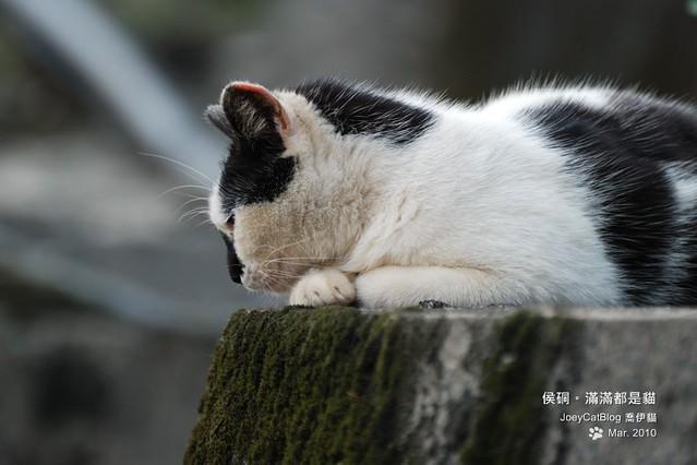 2010_0330_侯硐。滿滿都是貓DSC_0017