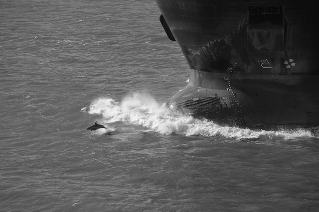 Dolphin and Bow, 11/17
