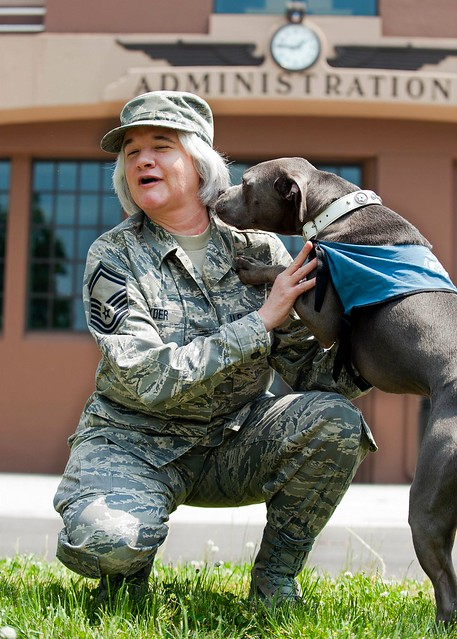 Image Result For Trained Guard Dogs