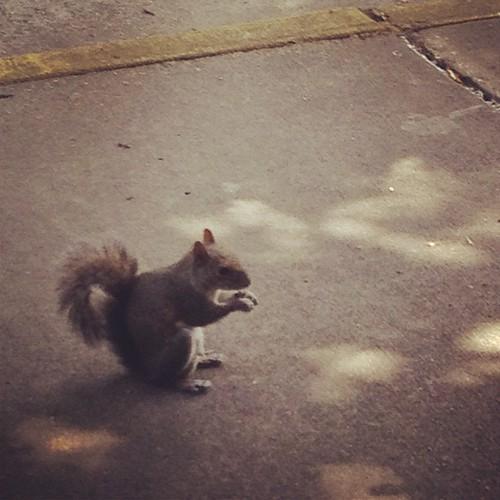 Hey squirrel-friend!
