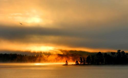 trees light lake fog clouds sunrise svärdsjön