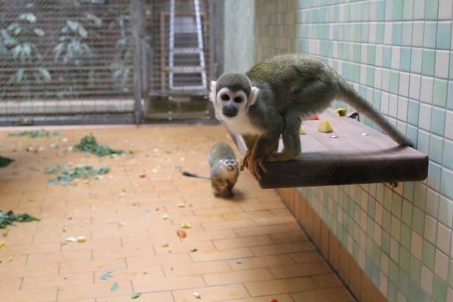 Une journ e nature berlin jour 3 je ne sais pas choisir - Petit singe rigolo ...