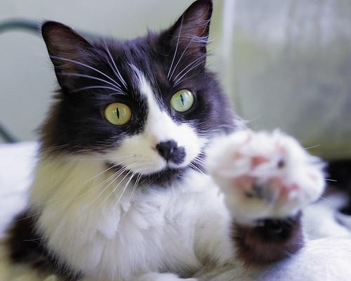 [フリー画像素材] 動物 1, 猫・ネコ ID:201205251000