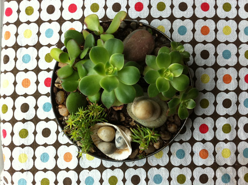 little succulent dish garden from the Hood River Saturday Market
