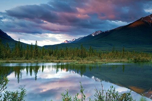 morning travel light sky lake canada mountains tree nature water pinetree clouds forest sunrise reflections landscape photography dawn cloudy alberta banff bluehour majestic idyllic tranquil scenics canadianrockies beautyinnature ☆thepowerofnow☆