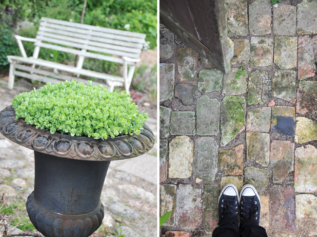 detaljer från en trädgård