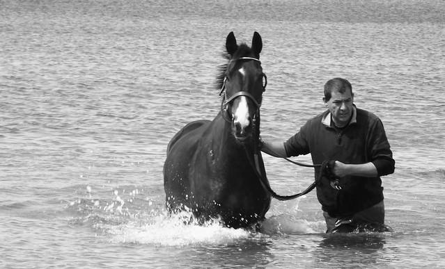 seahorses 07
