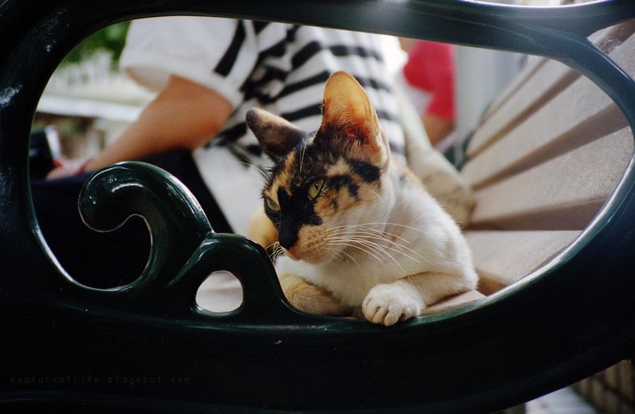 cats@Tai O