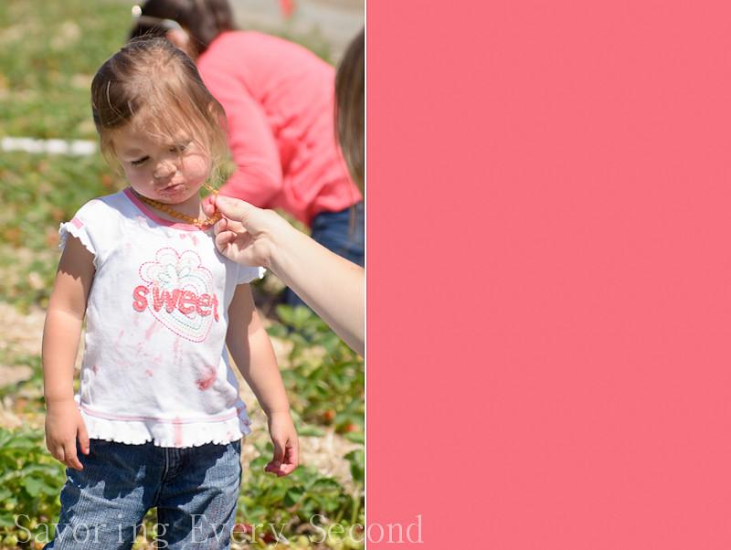 Strawberry Picking 1-029-Edit.jpg