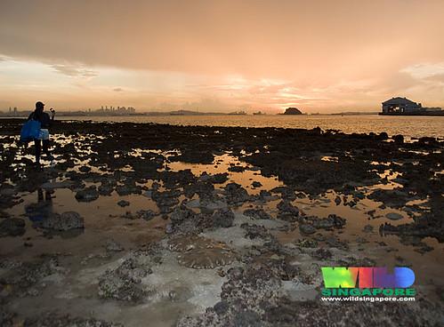 Sunrise at Terumbu Semakau