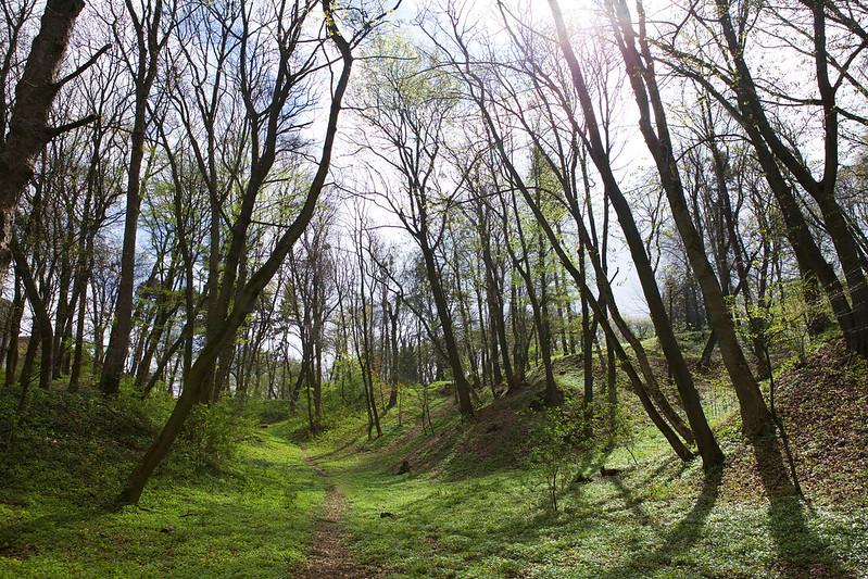 Spring forest. Striyskiy park. Lviv, Ukraine