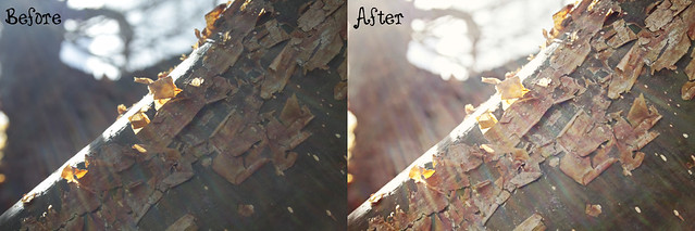 sunflare peeling tree before&after